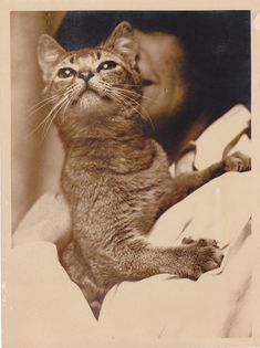 This fancy show cat, '30s | 30 Delightful Cat Photos From The '30s
