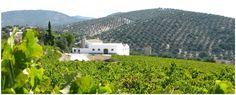 Exterior Bodegas Lagar Blanco. Sierra de Montilla