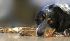 Cucciolo di cagnolino annoiato