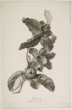 Line Art Flowers, Flower Art, Botanical Flowers, Botanical Art, Plant Illustration, Botanical Illustration, Wildflower Drawing, Gothic Pattern, Leaf Drawing