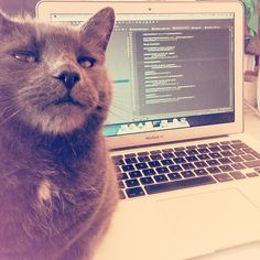 Engineer Mike started bootcamp one week after picking up this ball of fluff, Otto, who helps check each line of code.
