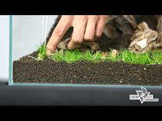 Tips and tricks for handling plants in the aquarium, Tropica Aquarium Plants - YouTube