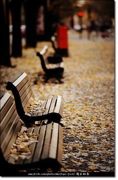leaf-filled benches.