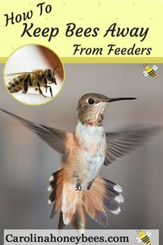 Are bees taking over your hummingbird feeder? Here are some tips that may help keep honey bees away from your hummingbird feeders. - Hummingbird Feeder - Ideas of Hummingbird Feeder Hummingbird Nectar, Hummingbird Plants, Hummingbird House, Hummingbird Feeder Recipe, Hummingbird Habitat, Hummingbird Migration, Hummingbird Swing, Hummingbird Pictures, How To Attract Birds