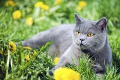 Safe Herbs for Cats Many herbs offer safe medicinal benefits for cats.Many herbs offer safe medicinal benefits for cats. Cat Medicine, Herbal Medicine, Herbs List, Evening Primrose, Pet Store, Cute Cats, Fur Babies, Dog Cat, Pets
