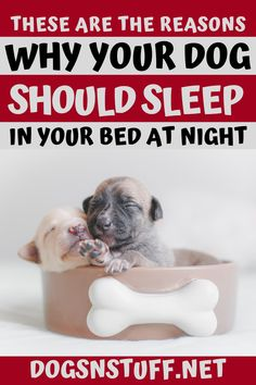Here are the top benefits of letting your dog sleep with you in the night! Wild Animals Pictures, Pet Fox, Dog Rules, Dog Care Tips, Dog Hacks, Sleeping Dogs, Pet Life, Dog Behavior, Dog Gifts