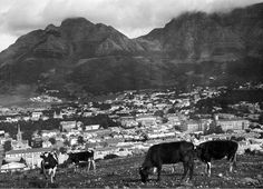 Cape Town from Signal Hill 1922 Visit South Africa, Cape Town South Africa, Old Pictures, Old Photos, Vintage Photos, Signal Hill Cape Town, Cities In Africa, Most Beautiful Cities, Historical Pictures