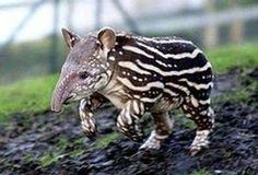 dziwne zwierzęta świata - Szukaj w Google