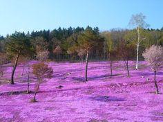 44 paysages colorés qui mettent en évidence la beauté naturelle incroyable de la Terre - page 5