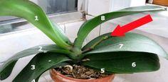 Tajemství, díky kterému Vám kupovaná orchidej pokvete celý rok!