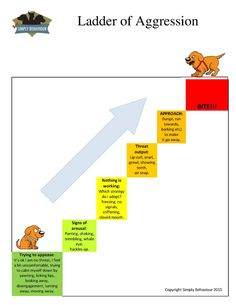 """Letting Your Dog """"Cry It Out"""" Could Cause Permanent Damage - Simply Behaviour Dog Training Courses"""