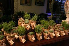 Souvenirs casamiento. Mini suculenta en maceta de arpillera, 100% biodegradable