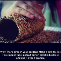Simple bird feeder. ... Spread a toilet paper tube with peanut butter, roll in bird seed, slip it over a tree branch. Good kid project.