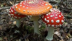 Don't Eat That! 5 Wild Mushrooms to Avoid in the US