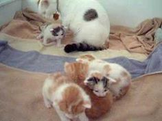 These Little Kittens Look Like They Re Still Getting Used To