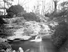 More from our local do-it-yourself shutterbug! Followers over the last year will have seen our previous contributions from Joel Kroin, whose pinhole captures cast a narrow bridge between the charm of old-fashioned photography and modern composition. His shots of the Garden grounds almost give a tricky glimpse into the past.