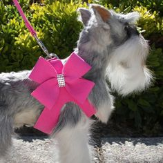 Nouveau Bow Crystal Step-In Harness by Susan Lanci   Ultrasuede Dog Harnesses at GlamourMutt.com