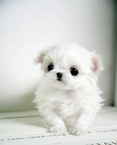 wow ! I want this puppy ! #puppies