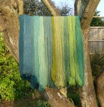 Dyeing greens for South Downs Yarn - Jenny Dean's Wild Colour Natural Dye Fabric, Natural Dyeing, Types Of Textiles, Art Du Fil, Green Wool, Shades Of Yellow, How To Dye Fabric, Hand Dyed Yarn, Hand Coloring