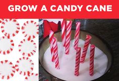 1.  Place a peppermint into a bowl of sugar. 2.  Overnight, take out the peppermints and put in candy canes. 3.  Watch how excited everyone gets when they wake up to find candy canes.