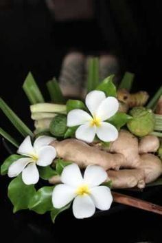 Zingiber officinale (Ginger Root, Luyang Dilaw)- Can be used to treat things from nausea to arthritis; blood thinner, lowers cholesterol. Used to treat colds. Should drink ginger tea daily.