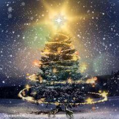 Christmas Tree Gif, Merry Christmas Wallpaper, Merry Christmas Pictures, Christmas Scenery, Merry Christmas Wishes, Christmas Mood, Christmas Greetings, Beautiful Christmas Pictures, Xmas