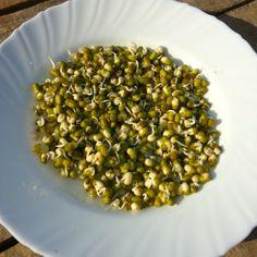 Naklíčené mungo fazolky. super před tréningem nebo na poslední večeři pro vysoký obsah protejnů 20-30 % http://cs.wikipedia.org/wiki/Mungo_fazole