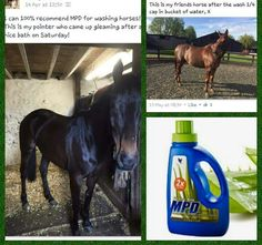 Aloe vera products are great for horses Forever Living Aloe Vera, Forever Aloe, Forever Freedom, Aleo Vera, Forever Business, Ice Baths, Pregnancy Looks, Animal Magic, Forever Living Products