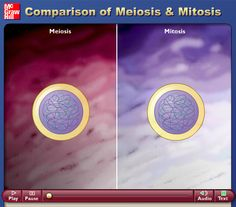 teaching biology Meiosis and mitosis. Explained accurately and concisely. Science Cells, Science Biology, Science Education, Life Science, Cell Biology, Ap Biology, Teaching Cells, Teaching Biology, Biology Classroom