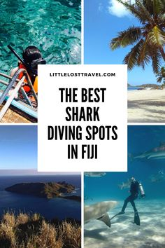 Want to see sharks in Fiji? These resorts are the best and most ethical places to dive and snorkel with sharks in Fiji. Find out about shark etiquette, safety, whether the experience is ethical and what it's like to come face to face with sharks in Fiji. Shark Diving, Sharks, Scuba Diving, Cave Diving, Travel To Fiji, Solo Travel, Animal Experiences, Maui Vacation, Travel Advice