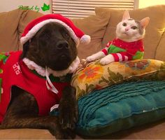 Have you seen how we look in our costumes?! @Spettrox