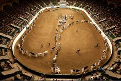 Even though this is a Dairy show, the best feeling in the world was showing in this arena at the Great Minnesota State Fair in 2010 with my breeding heifer Dakota <3