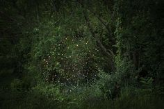 Photographer Ellie Davies Creates Mystical Scenes That Explore Our Relationships With The Forest