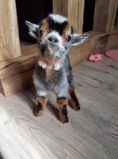 Tiere Oh I want one he is so cute animals Cute cute animals Tiere Baby Animals Super Cute, Cute Little Animals, Cute Funny Animals, Cutest Animals, Funny Cats, Baby Animals Pictures, Cute Animal Photos, Baby Pictures, Cute Pictures