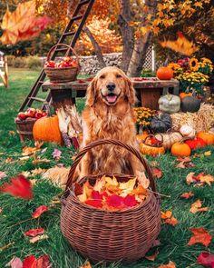 Autumn Cozy, Autumn Feeling, Autumn Scenery, Autumn Aesthetic, Fall Wallpaper, Autumn Photography, Fall Harvest, Harvest Season, Fall Season