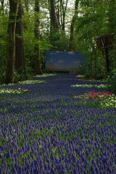 Spring flowers, Keukenhof, Netherland