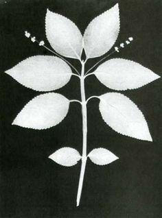 "William Henry Fox Talbot ""Botanical Specimen""- 1839- Photogenic Drawing"