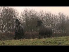 She Reunites A Horse With His Long Lost Friend. So sweet! Sure to brighten up your day!