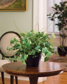 Pothos & Grass Silk Plant