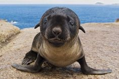 The cutest little seal ever!
