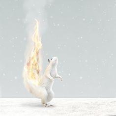GEA / Mariola Fuentes / Detalle Tamaño: 96 x 200 cms Autor: Angel Pantoja Polar Bear, Animals, Fonts, Author, Animales, Animaux, Animal, Animais