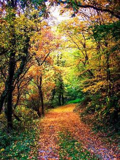 Autumn path (no location given) by ibilicious