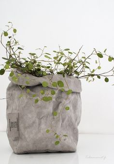 plant in a bag, urban jungle, green