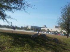 Getting closer to the Orange County Convention Center.    For more images go to: https://plus.google.com/photos/107449616354324923178/albums/5846524443103446993    #GOA2013