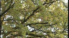 Bomen in de herfst Plants, Outdoor, Outdoors, Flora, Plant, Outdoor Games, Outdoor Living, Planting