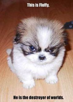 PHOTOS: Cutest Angry Puppy Meme Contest