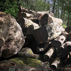 When I see piles of logs like this I dream for the right projects to come along to create with them. One very lovely pippy Oak log looks like its pretty dry too. Local Timber mills little hidden gems are the best for the imagination to run wild. #aliceblogg
