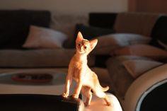 Fox, Animals, Instagram, Cats, Animais, Animales, Animaux, Animal, Foxes