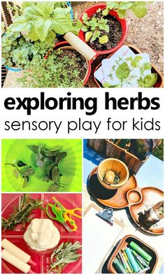 The incredible, edible herb? Use herbs for natural sensory play explorations and science inquiry with toddlers and preschoolers #sensory #preschool