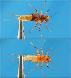 Realistic Flies -